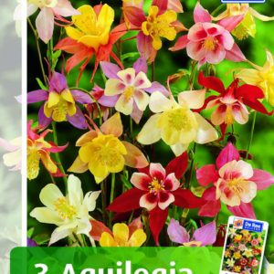 Akeleje - Mix - 118 - Aquilegia - Mix
