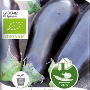 Aubergine, Black Beauty, Organic - Solanum melongena