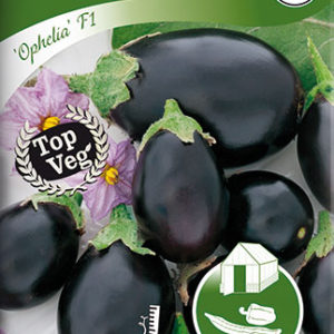Aubergine, Ophelia F1 - Solanum melongena