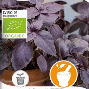 Basilikum, Rød, Rosie, Organic - Ocimum basilicum var....