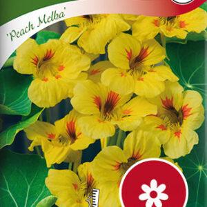 Blomsterkarse, Busk-, Peach Melba - Tropaeolum majus