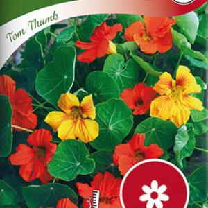 Blomsterkarse, Busk-, Tom Thumb, bland. - Tropaeolum majus...