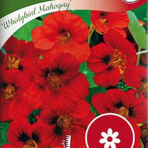 Blomsterkarse, Busk-, Whirlybird Mahogny - Tropaeolum majus